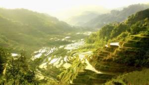 800px-Ifugao_Rice_Terraces
